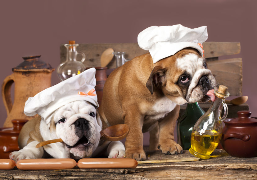 29682908 - english bulldog puppies in chef